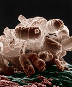 Synthetic Biology: State of the Art
